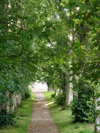 Tree_path_1